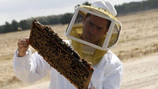 Νότιο Αιγαίο: Αιτήσεις για συμμετοχή στο Μελισσοκομικό Πρόγραμμα έτους 2021