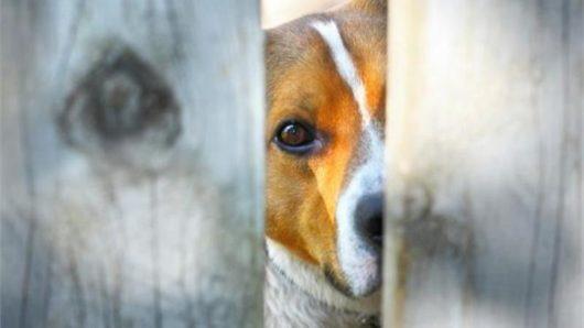 Νάξος: Συλλήψεις για παραβίαση κανόνων διατήρησης ζώων