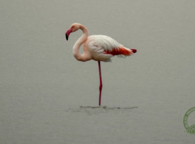 flamingo xeimonas 1