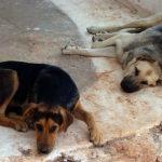 Δήμος Μυκόνου: Αύξησε τα κονδύλια για την κτηνιατρική φροντίδα των αδέσποτων ζώων