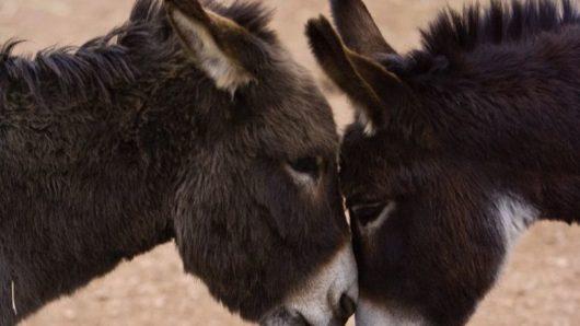 Νάξος: Σύλληψη για κακομεταχείριση ζώων