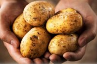 patates 000