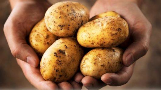 Διανομή πατάτας από το Σύλλογο Τριτέκνων Νάξου