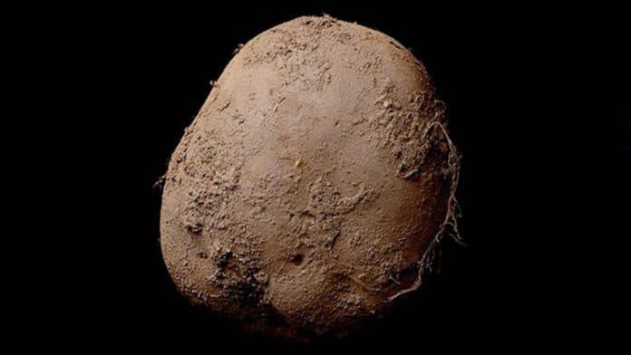 fotografia patata