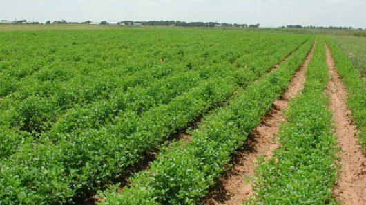 Υπουργείο Αγροτικής Ανάπτυξης και Περιφέρειες μαζί για την υλοποίηση του Προγράμματος Αγροτικής Ανάπτυξης