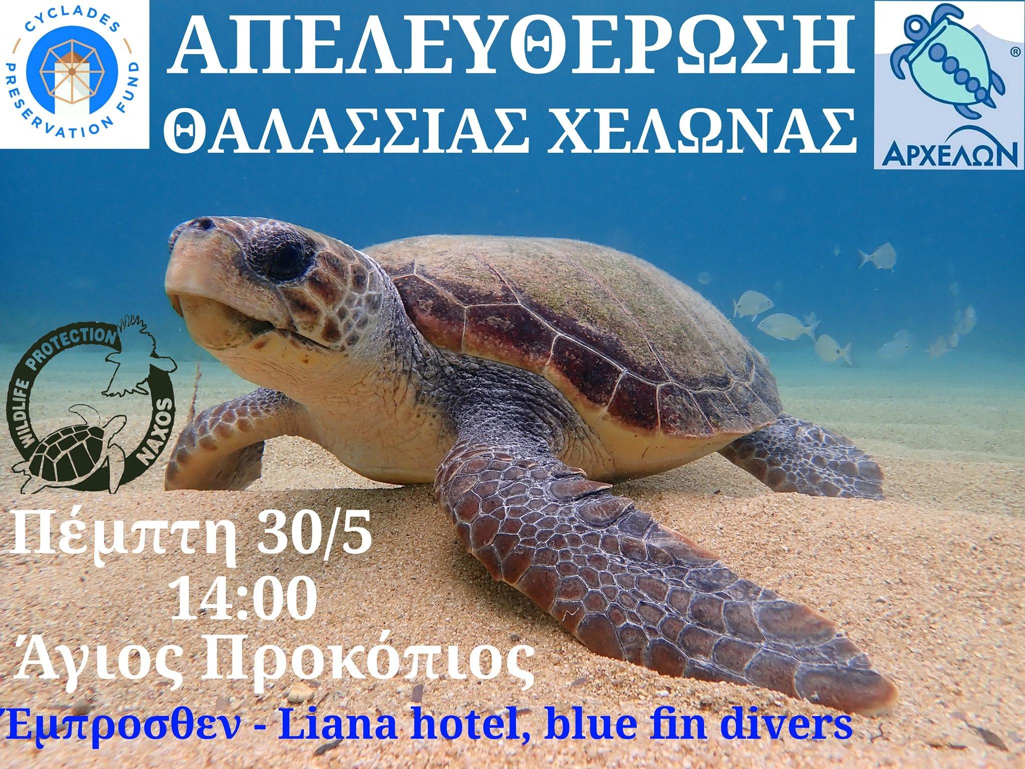 Ελεύθερη στη θάλασσα του Αγίου Προκοπίου Νάξου θα αφεθεί η Caretta-Caretta «Ζωή»