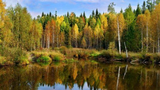 Εκλογές 2019: Πόσα δέντρα χρειάστηκαν για να παραχθούν τα ψηφοδέλτια