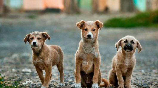 Είκοσι εκατ. ευρώ στους δήμους για την κατασκευή καταφυγίων αδέσποτων ζώων