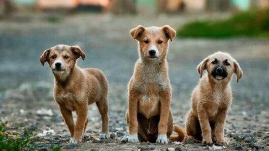 κατασκευή καταφυγίων αδέσποτων ζώων