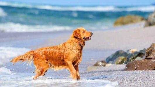 Δήμος Νάξου & Μικρών Κυκλάδων: Μέτρα προστασίας ζώων συντροφιάς και αδέσποτων