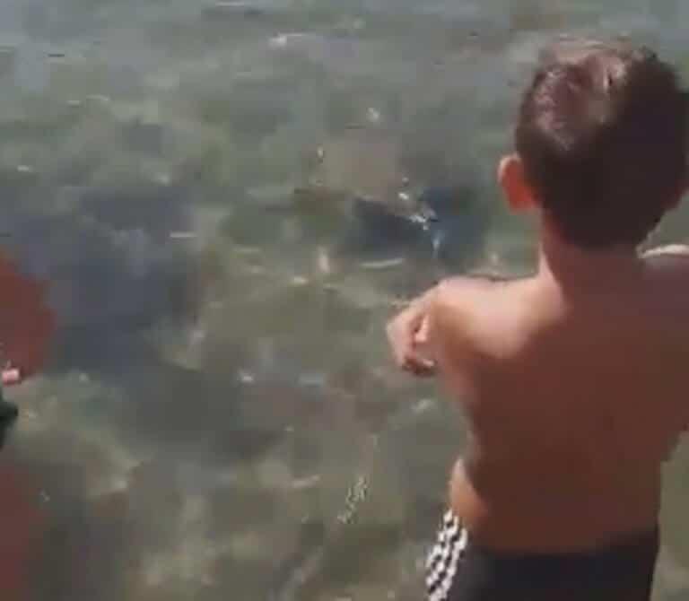 Σύρος: Απρόσμενος επισκέπτης στην παραλία του Λωτού (video)