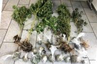 Σύλληψη Νάξος κατοχή και καλλιέργεια κάνναβης