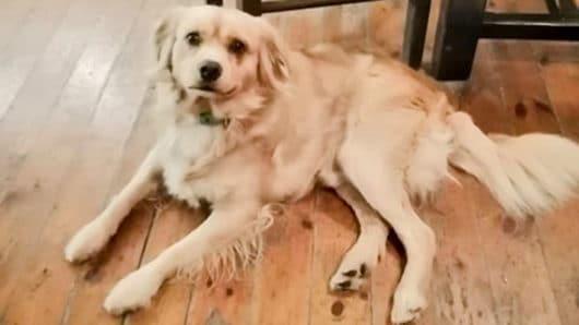 βρέθηκε το εικονιζόμενο σκυλάκι