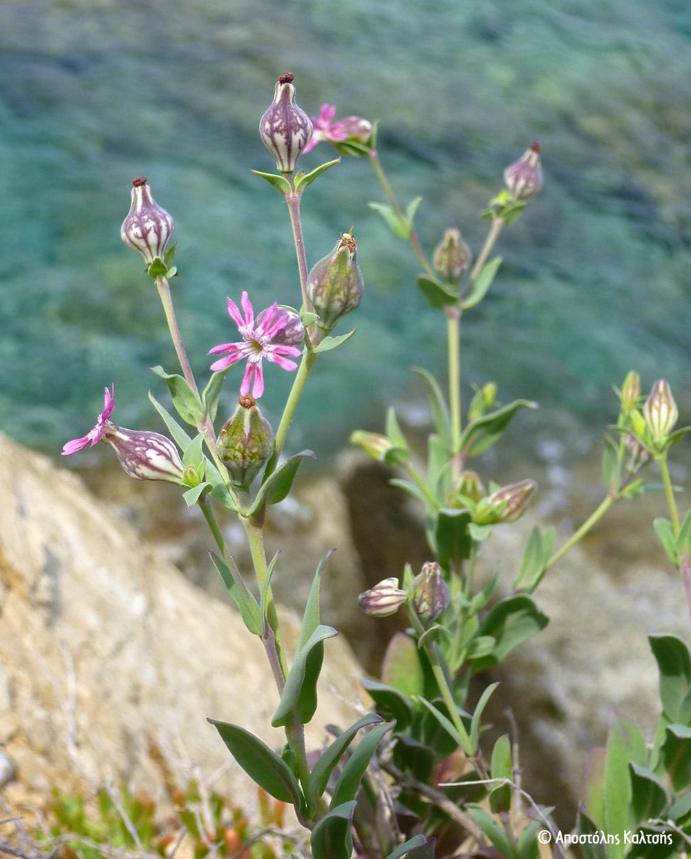Γκαλαπάγκος της Μεσογείου