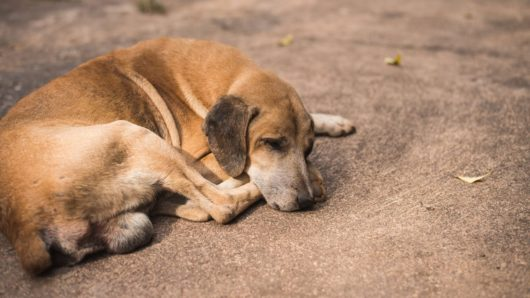 Ανακοίνωση Δήμου Σύρου-Ερμούπολης για την σίτιση αδέσποτων ζώων