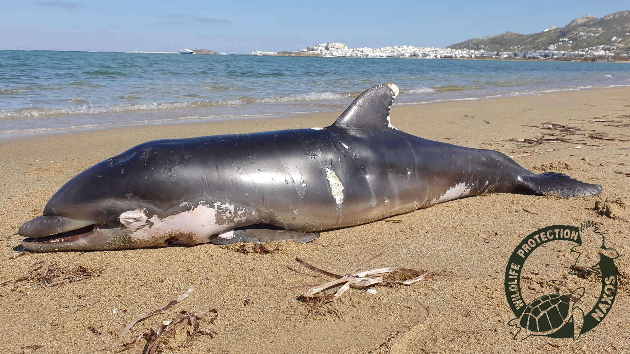 νεκρού δελφινιού