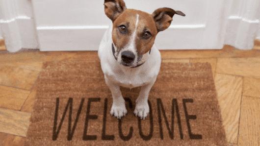 Καταρρίπτεται ο μύθος ότι κάθε σκυλο-έτος ισοδυναμεί με επτά ανθρώπινα χρόνια