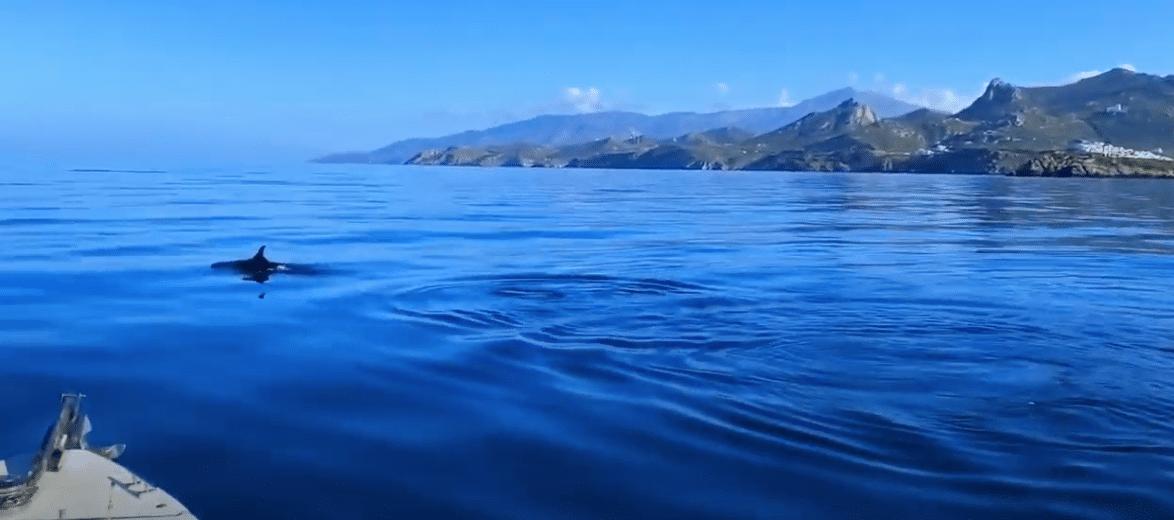 δελφίνια Νάξος