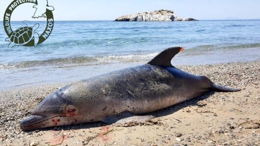 Νεκρό δελφίνι στην παραλία της Χίλιας Βρύσης