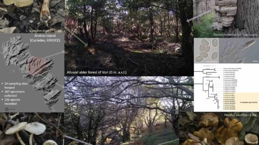 Η μελέτη των μανιταριών της Άνδρου αποκαλύπτει τον μοναδικό πλούτο των δασών σκλήθρου