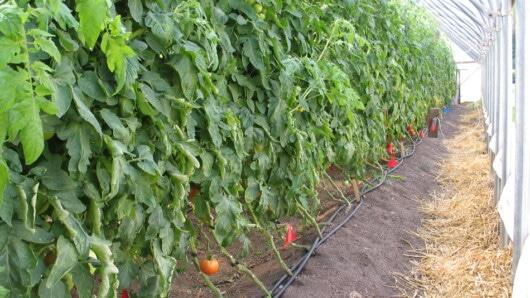 Αγροτικός Σύλλογος Σύρου: «Δεν υπάρχει κίνδυνος από την κατανάλωση τοπικών προϊόντων»
