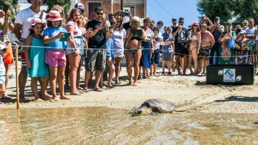 θαλάσσια χελώνα Πηνελόπη απελευθέρωση