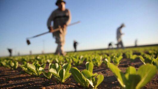Αναφορά του Φ. Φόρτωμα για την οικονομική δυσπραγία του Αγροτικού Συλλόγου Σύρου