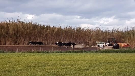 Νάξος: Καθ' όλα «εντάξει» η φάρμα με τα ζώα στο Καστράκι