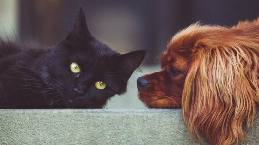 Ζώα Συντροφιάς: Τι προβλέπει το νομοσχέδιο
