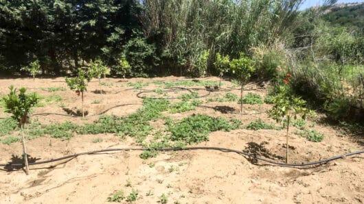 Κυνίδαρος Νάξου: Δεκαέξι δέντρα κόπηκαν από «τρομοκράτες της υπαίθρου», δεκαέξι δέντρα ξαναφυτεύτηκαν!