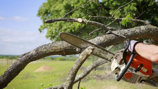 Απλοποιείται η διαδικασία για κοπή ή κλάδευση δέντρων σε ιδιωτικές εκτάσεις
